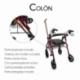 Andador para ancianos | Aluminio | Plegable | Frenos en manetas | Asiento y respaldo | 4 ruedas | Burdeos | Colón | Mobiclinic - Foto 3